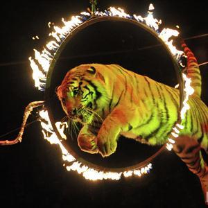 Цирки Дубны