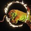 Цирки в Дубне