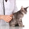 Ветеринарные клиники в Дубне